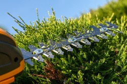 sharp steel blades of a small cordless electric hedge trimmer cutting, portable light tool for branches in garden, trimming green hedges and bushes, working during a sunny summer day under blue sky