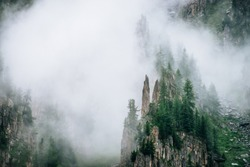 Sharp stones of rocky mountain with coniferous trees in dense fog. Low cloud near high rock with forest. Colorful foggy green landscape with rocks and trees in clouds. Steep slope with boulder streams