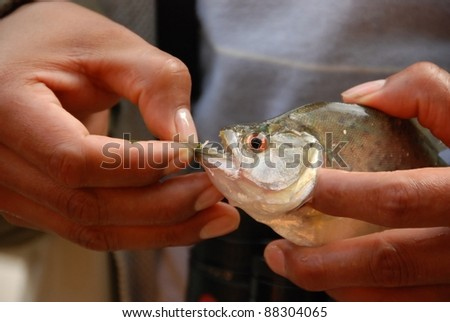 sharp Teeth of Piranha in the jungle of peru