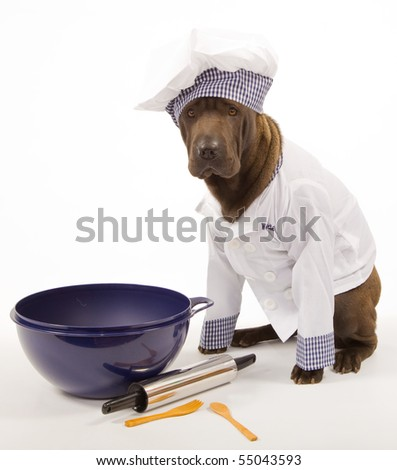 Sharpei in chef outfit with cooking tools on white background