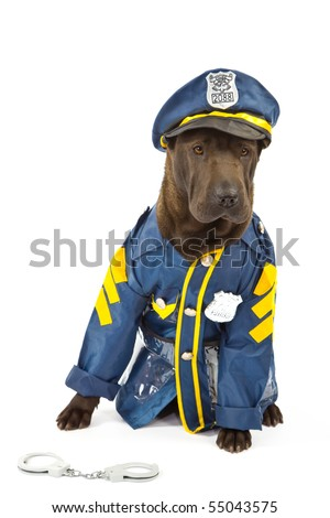 Sharpei in play policeman outfit on white background - stock photo