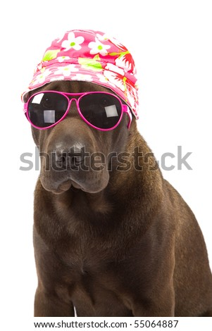 Sharpei with floral hat and pink sun glasses on white background
