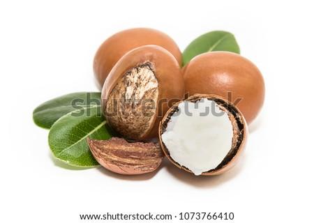 Shea butter. Vitellaria paradoxa