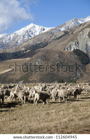 Sheep farm and mountain valleys view southern island New Zealand - stock photo