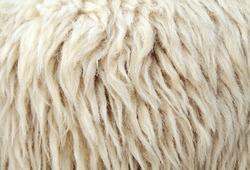 Sheep fur texture macro