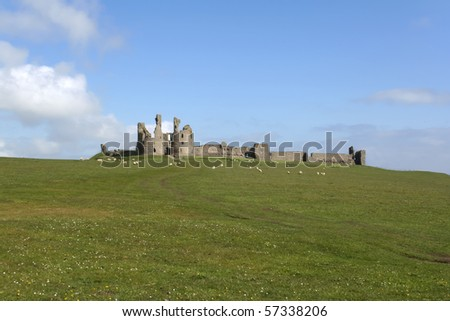 sheep grazing amidst the ruins of Dunstanburgh castle on the northumbrian coast of england
