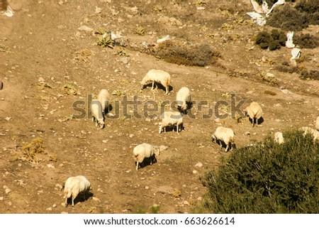 Sheep herd #663626614