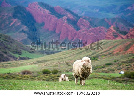 Sheep in Jeti-Oguz gorge - one of the picturesque gorges in Kyrgyzstan #1396320218