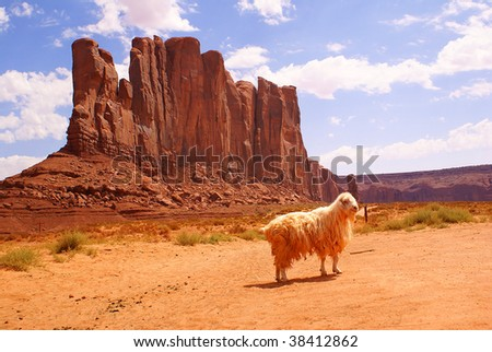 stock photo   sheep in