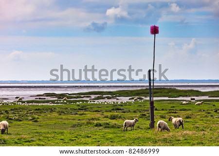 Sheep in the Danish Marsh at Sneum Sluse, Esbjerg