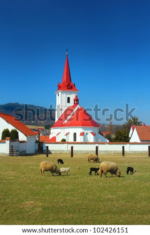 Sheep on pasture near the village church