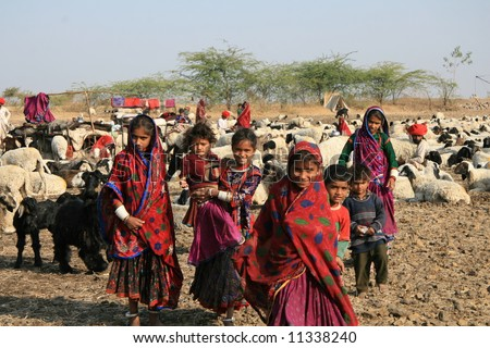 Sheep Play A Major Role In The Lives Of Nomadic People In The Arid ...