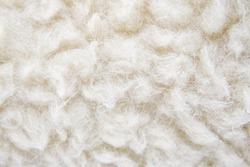 Sheep's wool. Sheep wool texture. lamb
