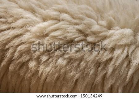 Sheep skin Background