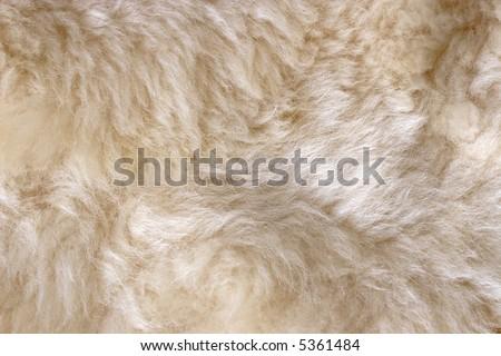 Sheep skin rug close-up