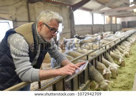Sheep stockbreeder in barn using digital tablet
