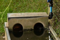 sheep watering trough with blue feeder pipe and tap