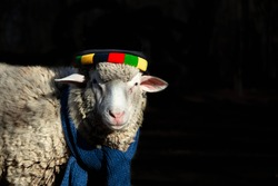 Sheep with colorful cat and blue scarf in black background, wallpaper. Sheep fashion.