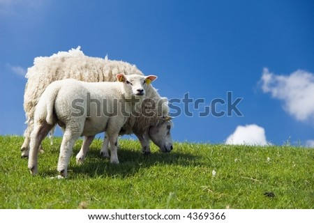 Sheep with lamp