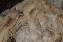 Sheep Wool. Close up of raw sheep wool in natural color. Pile of merino wool for background