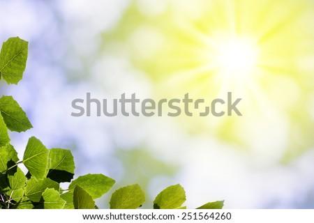 Sheet of the aspen at sunshines #251564260