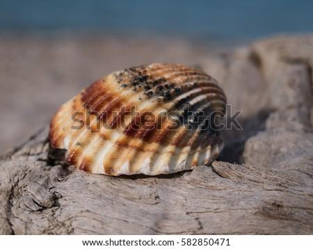 Shell  #582850471