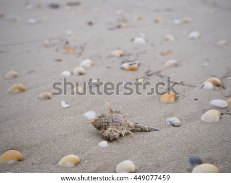 Shell and Beach #449077459