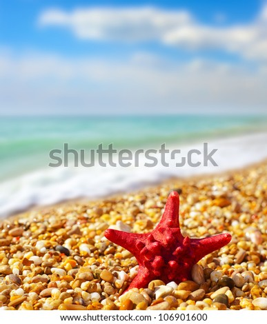 shell and starfish