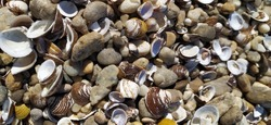 Shell background. Colorful shells on sand beach. Multi-colored shells on seaside. Calm vacation background with limited depth of field