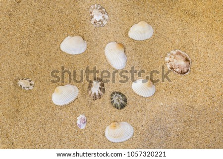 shell background on the yellow sand of the beach  #1057320221