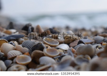 shell beach closeup on a cloudy summer morning on a blurred background of waves #1353954395