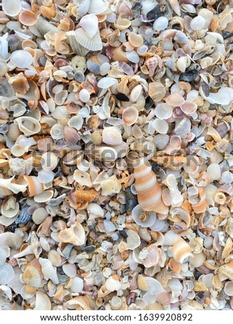 Shell beach is the place of many shells.