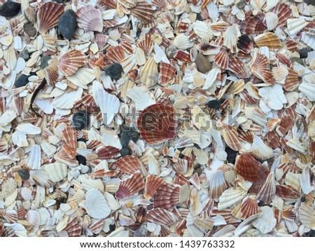 Shell covered Fenella Beach in Peel, Isle of Man #1439763332