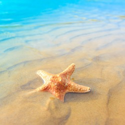 Shell Fish Sea