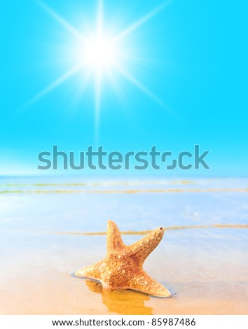 Shell Fish Under the Sun