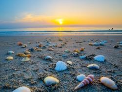 Shell lined beach sunrise