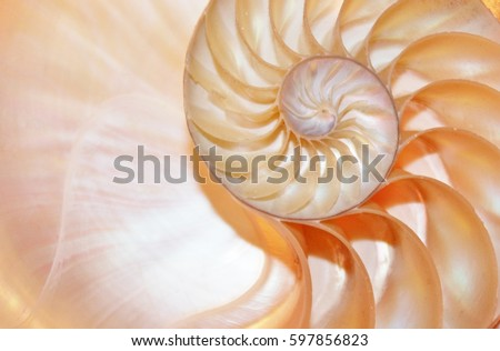 shell nautilus pearl Fibonacci sequence symmetry cross section spiral shell structure golden ratio background nature pattern mollusk (nautilus pompilius) copy space half split stock, photo, photograph