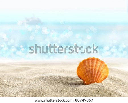 Shell on a sandy beach