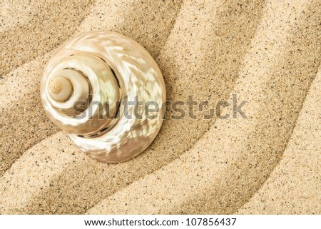 shell on a wavy sand full frame closeup