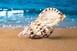 Shell on beach close up. Seashore, waves and sand. Macroshoot