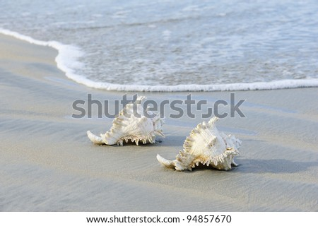 shell on beach in andaman sea thailand