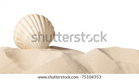 shell on beach isolated on a white background,with a lot of copy-space