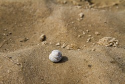 Shell on ripples in sand on river bank