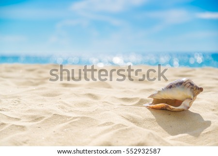 Shell on sand at beach and blue sky and bokeh sea #552932587