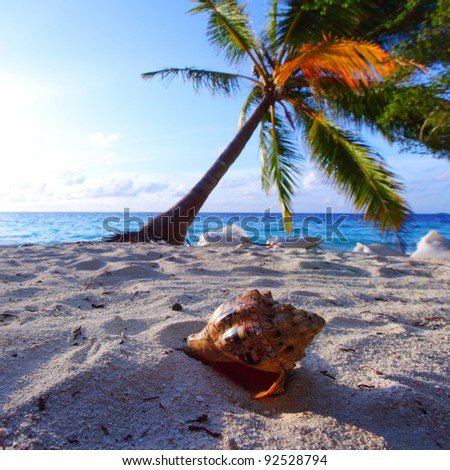 shell on sand under palm