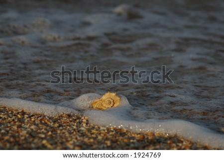 Shell on the Azov sea