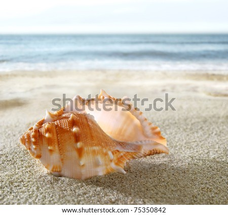 Shell on the sandy beach