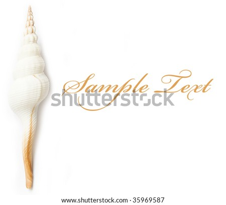 shell on the white isolated background