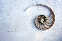 shell pearl nautilus Fibonacci section spiral pearl symmetry half cross golden ratio shell fibonacci structure background copy space  mother of pearl ( pompilius nautilus ) - stock photo photograph