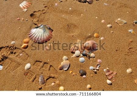 shell, sand, seashell #711166804
